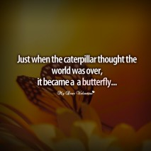 inspirational quotes - Just when the caterpillar