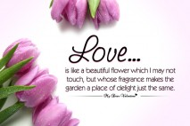 Love Quotes - Love is like a beautiful flower