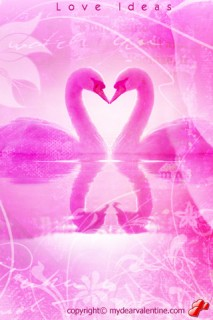 pink love swans